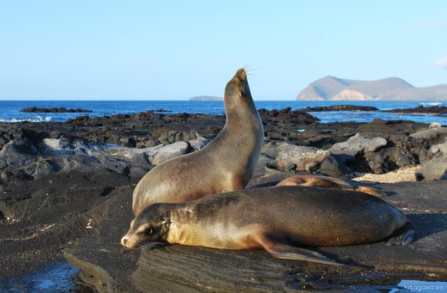 ガラパゴス諸島 動物