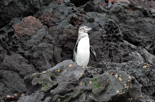 ガラパゴス諸島 固有種