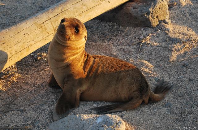 ガラパゴス諸島 観光 見所 予約