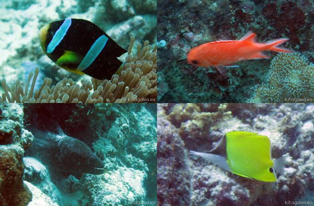 モルディブ 熱帯魚