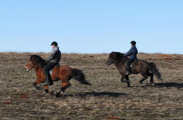 アイスランド 乗馬