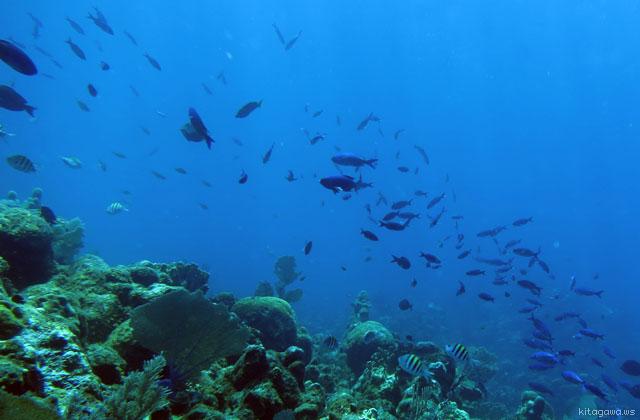 カリブ海ダイビング
