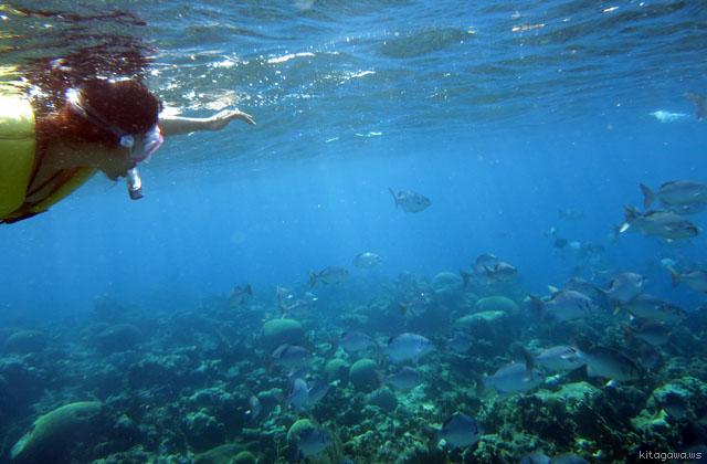ホンジュラス共和国ロアタン島シュノーケリング