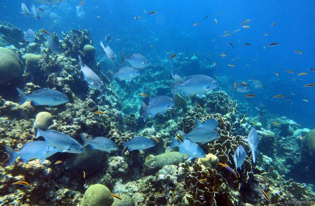 ロアタン島ダイビング