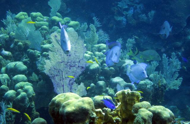 ホンジュラス共和国ロアタン島スキューバダイビング