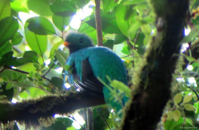 コスタリカ共和国モンテベルデ自然保護区