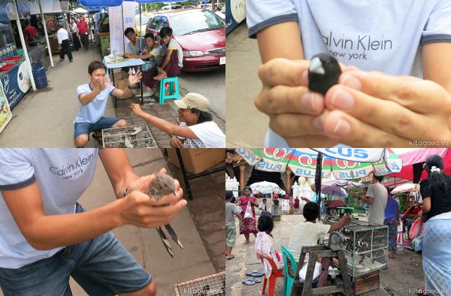 ミャンマー 小鳥屋 タンブン
