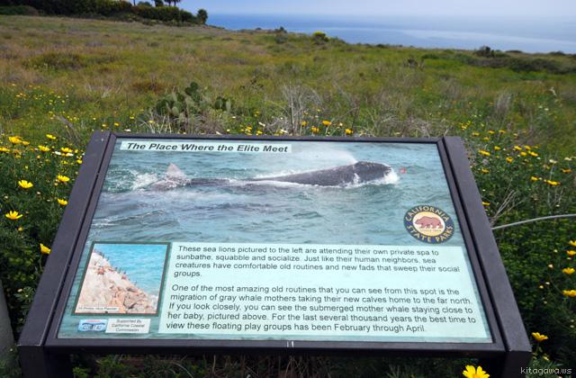 Point Dume Natural Preserve ポイントデューム