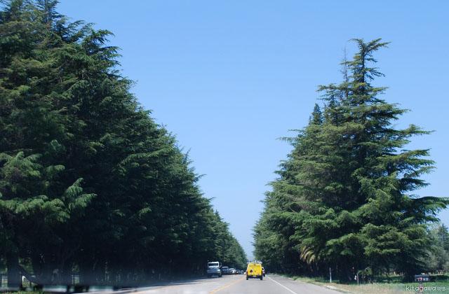 カリフォルニア ドライブ