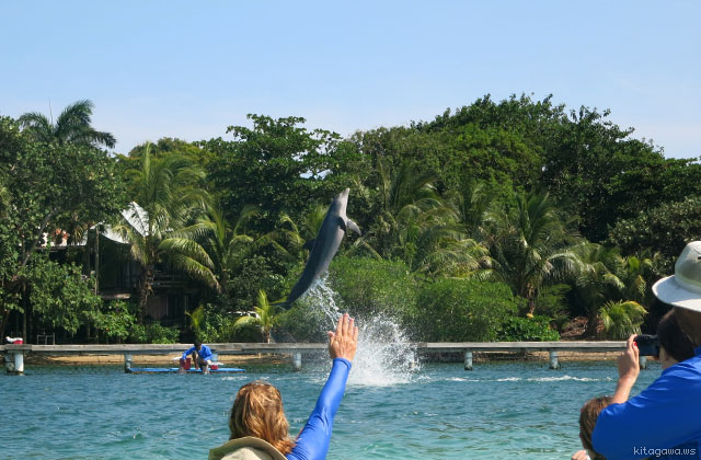 Dolphin Encounter, Anthony's Key Resort