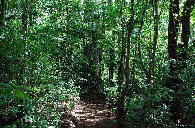 モンテベルデ自然保護区 Monteverde Cloud Forest Reserve