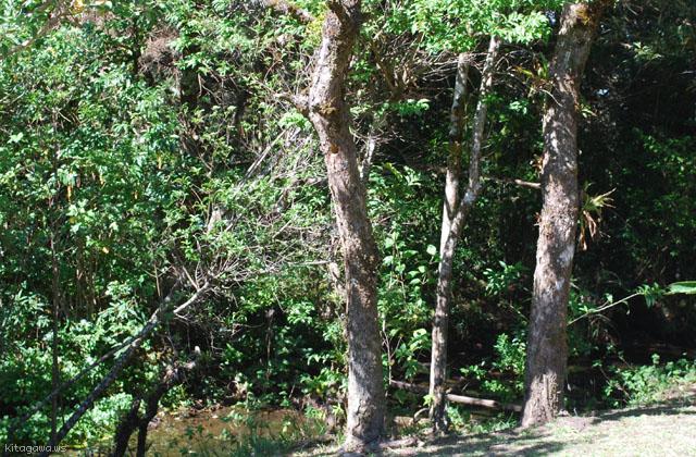 Curi Cancha Reserve クリカンチャ リザーブ モンテベルデ