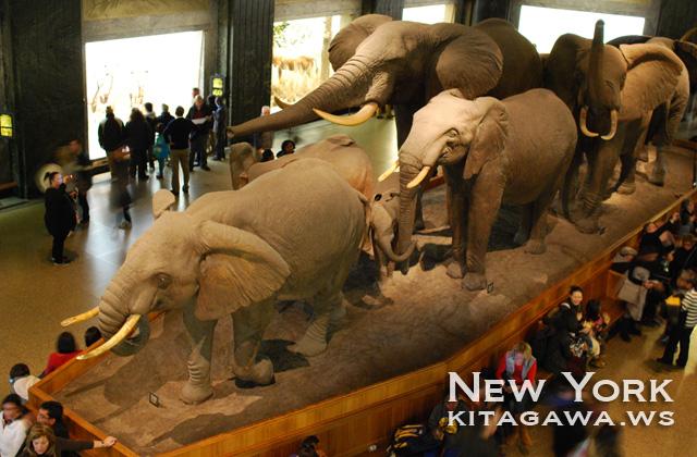 エイクリー・アフリカ哺乳館