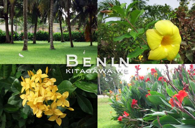 西アフリカの花