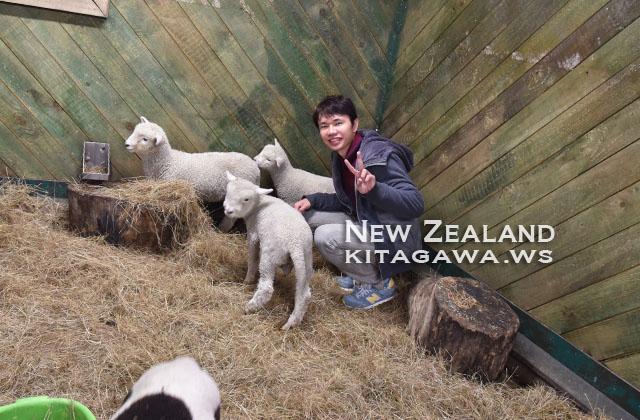 ニュージーランド旅行記