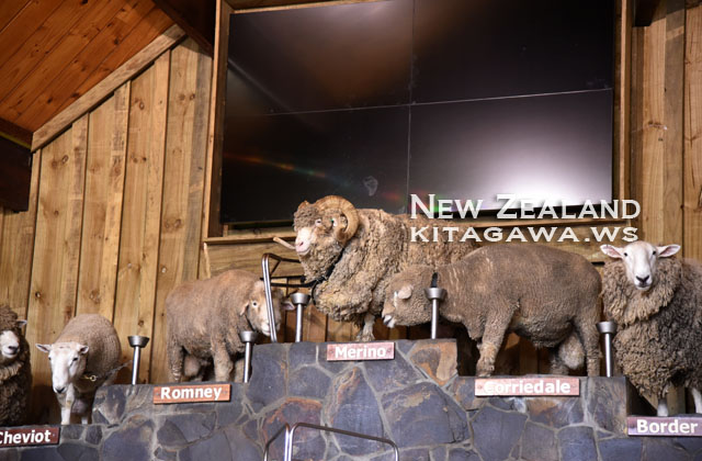 羊 メリノ種 Merino