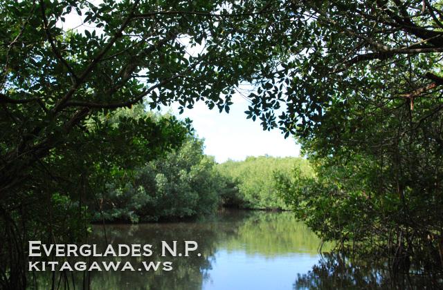 エバーグレーズ国立公園の画像 p1_19