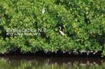フロリダ エバーグレーズ国立公園 野鳥