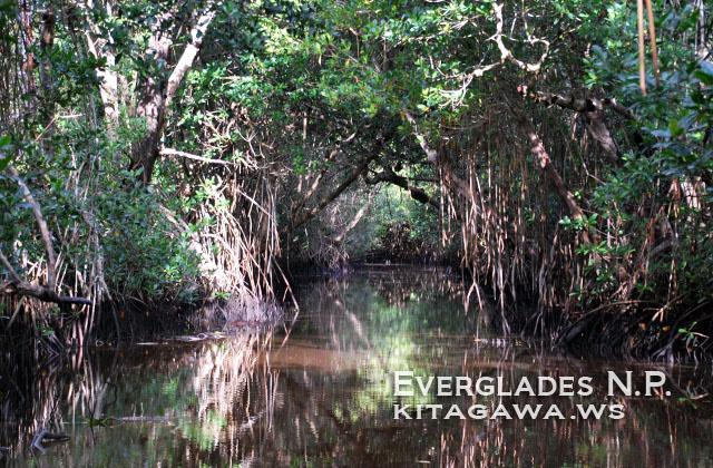 エバーグレーズ国立公園の画像 p1_15