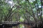 エバーグレーズ国立公園 Everglades National Park