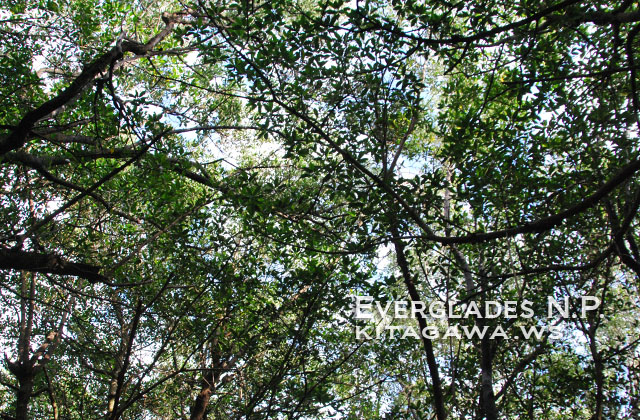エバーグレーズ国立公園