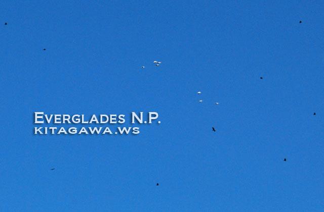 エバーグレーズ国立公園の画像 p1_7