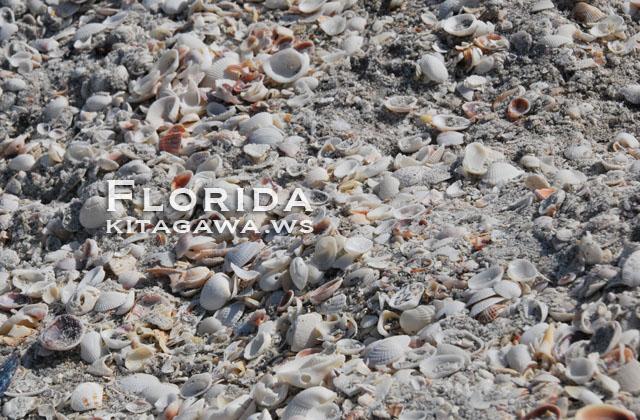 シェルビーチ 貝殻
