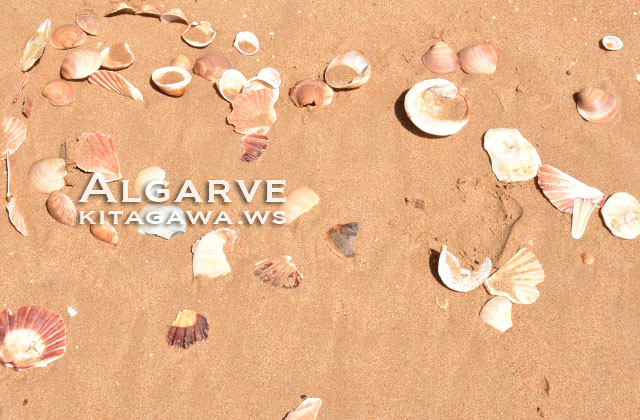 ポルトガル 貝殻 ビーチ