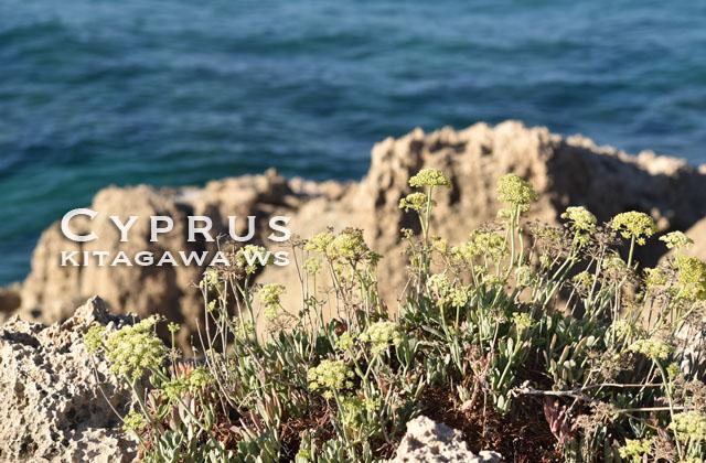 北キプロス 自然