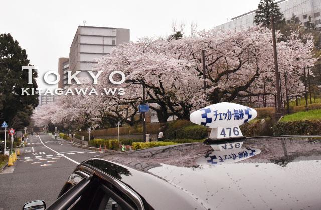東京 桜並木