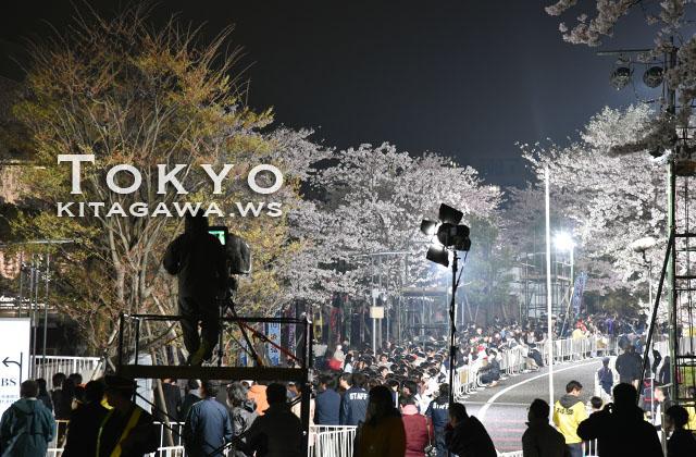 赤坂サカス 桜並木