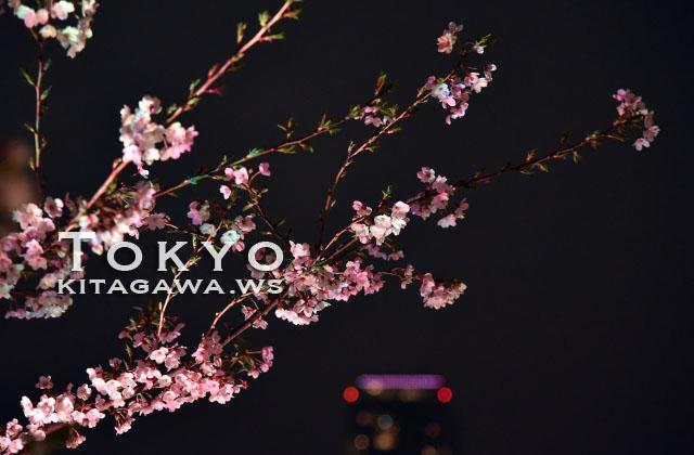 都内 夜桜 ライトアップ