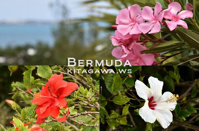 バミューダ島 旅行記