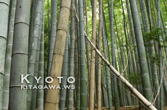京都 竹林の小径