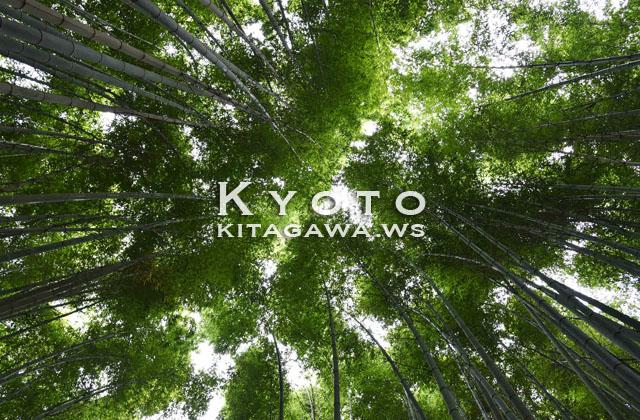 京都 嵐山 竹林