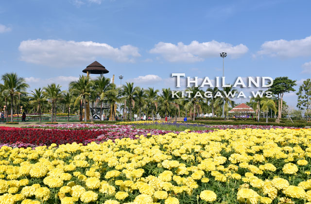 Amazing International Flower Festival in Khon Kaen