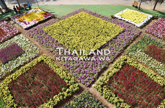 Amazing International Flower Festival