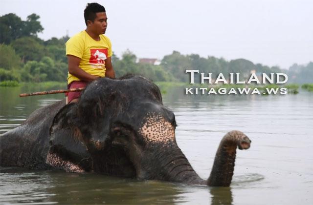 タイ アユタヤ 象使い 水浴び