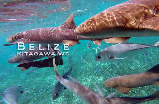 Belize Shark Ray Alley Snorkeling