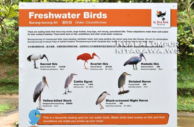 水辺の鳥図鑑