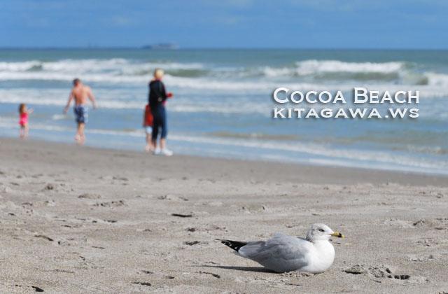 ココアビーチ旅行記