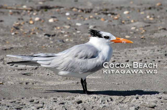 フロリダ 海鳥