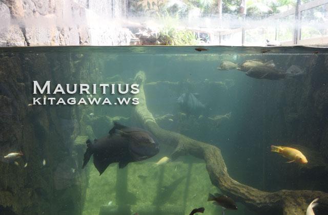 水族館 モーリシャス