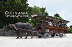 竹富島 観光 旅行記ブログ