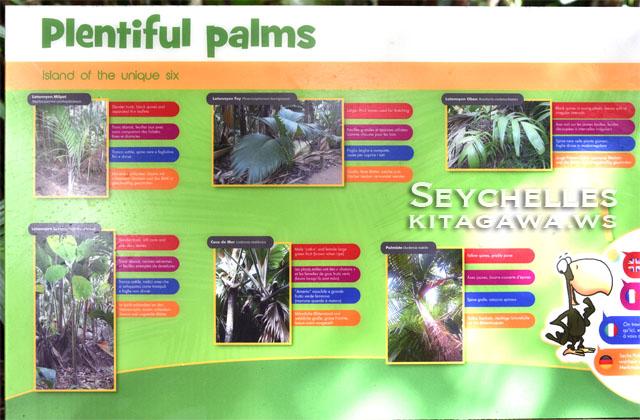 Seychelles Plentiful Palms