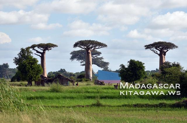 マダガスカル旅行 モロンダバ観光