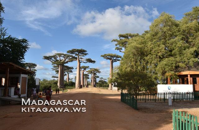 バオバブの並木道 マダガスカル