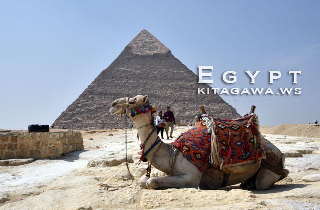 ピラミッド らくだ エジプト