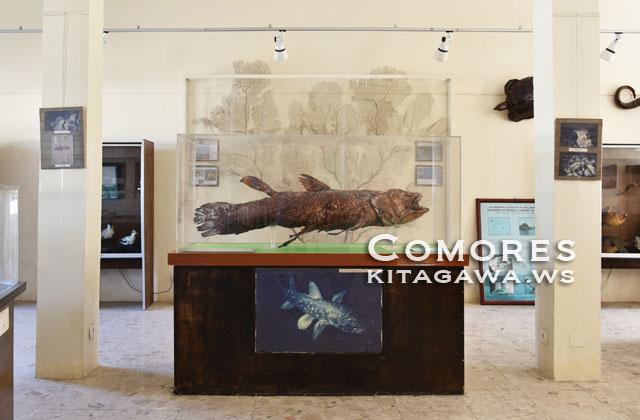 コモロ博物館 Musee des Comores シーラカンス