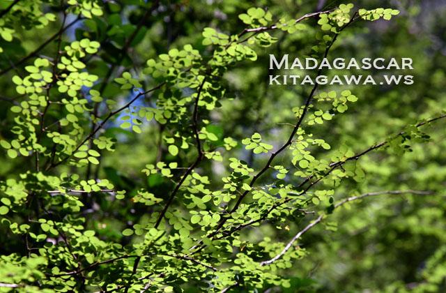 マダガスカル旅行記ブログ